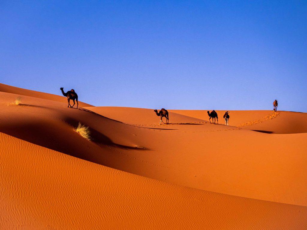 marrakech desert tour 3 days